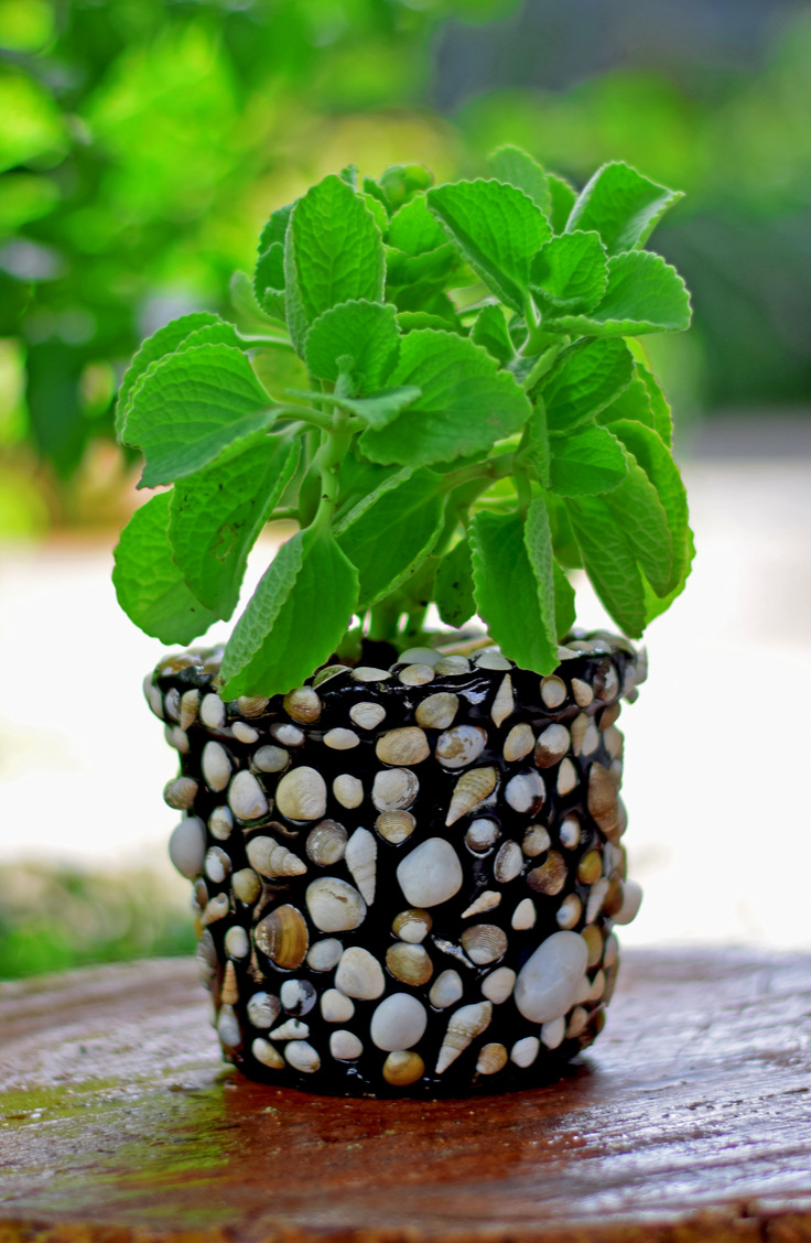 Did you know you can make a planter out of seashells that you find? If you're looking for clever ways to reuse those found seashells, check out this list of amazing things to do with seashells.