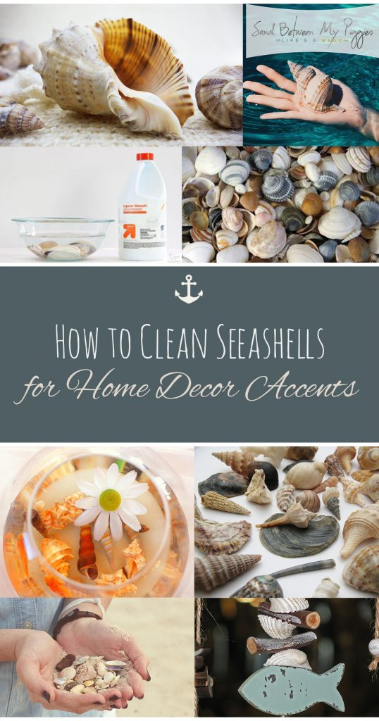 How to Clean Seashells for Home Decor Accents| Clean Seashells, How to Clean Seashells, Cleaning, Cleaning Hacks, DIY Clean, DIY Cleaning Hacks, Popular Pin #Cleaning #DIYClean #Seashells