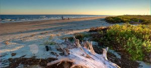 Here is a guide to Galveston beaches! Find the perfect beach destination for your next vacation! There are beaches for a variety of interests! Don't miss out on the perfect Galveston beach day! You won't regret it.