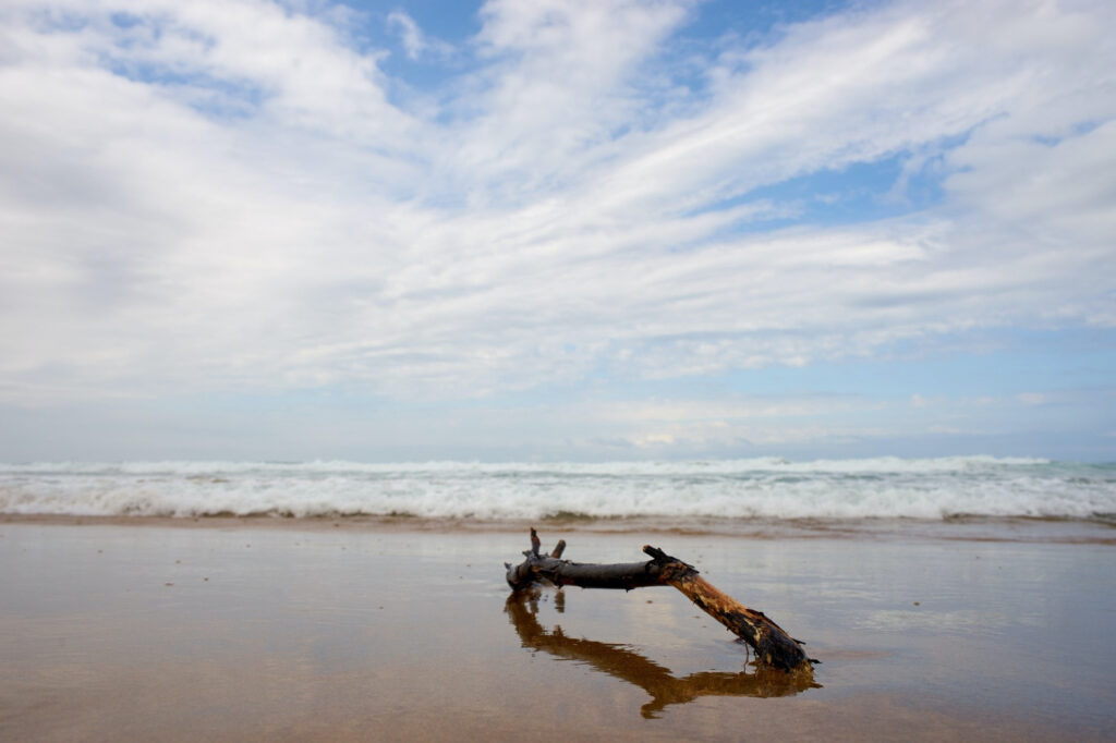 Where to get driftwood - by the beach