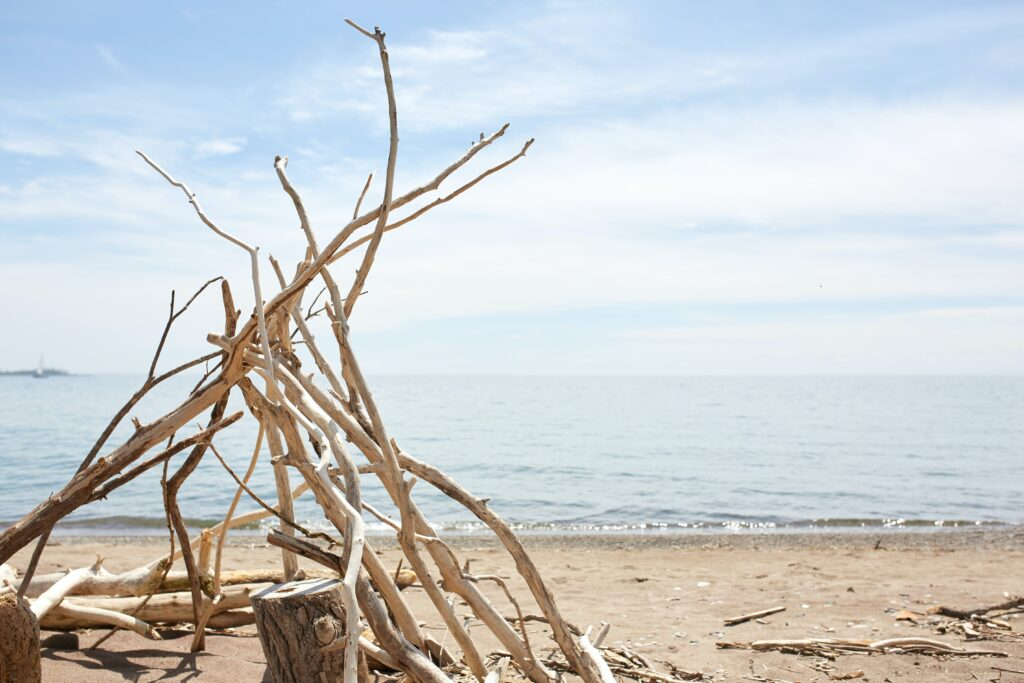 Finding driftwood at the beach