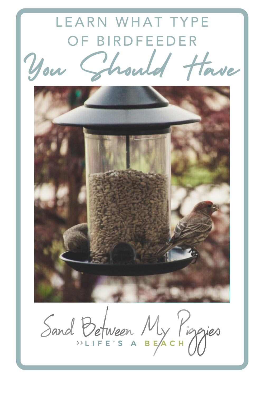 Sandbetweenmypiggies.com is loaded with cute, fun decor and leisure ideas! There are so many great reasons to have a bird feeder in your yard! Find out which style is the best fit for you!